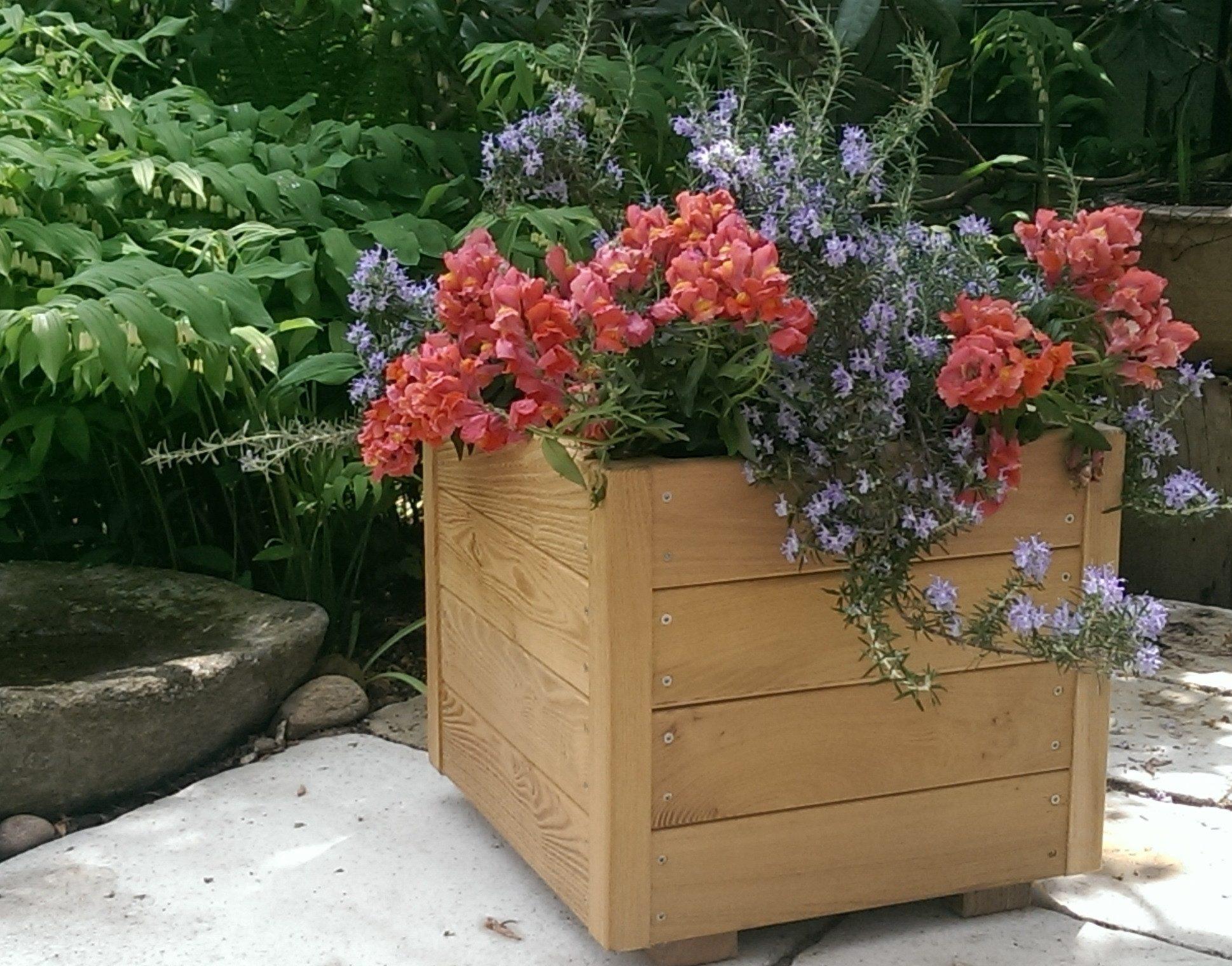 Eivind plantekasse i Robinie med blomster (medfølger ikke)