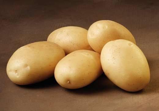 Sava - læggekartofler 1.5 kg.