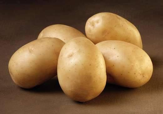Solist - Økologiske læggekartofler 1,5 kg.