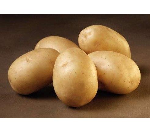Solist - Økologiske læggekartofler 1.5 kg.
