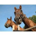 Hestehegn ridebane