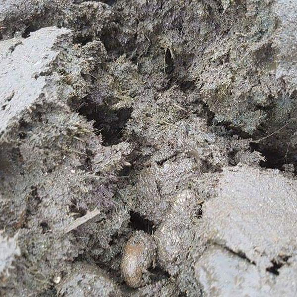 Image of   GreenBio Husdyrsgødning til økologisk dyrkning