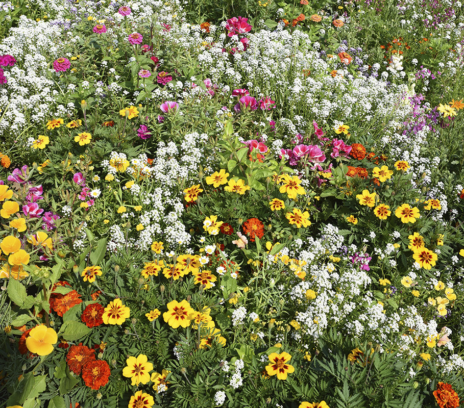 Blomsterblandinger - det bør du vide