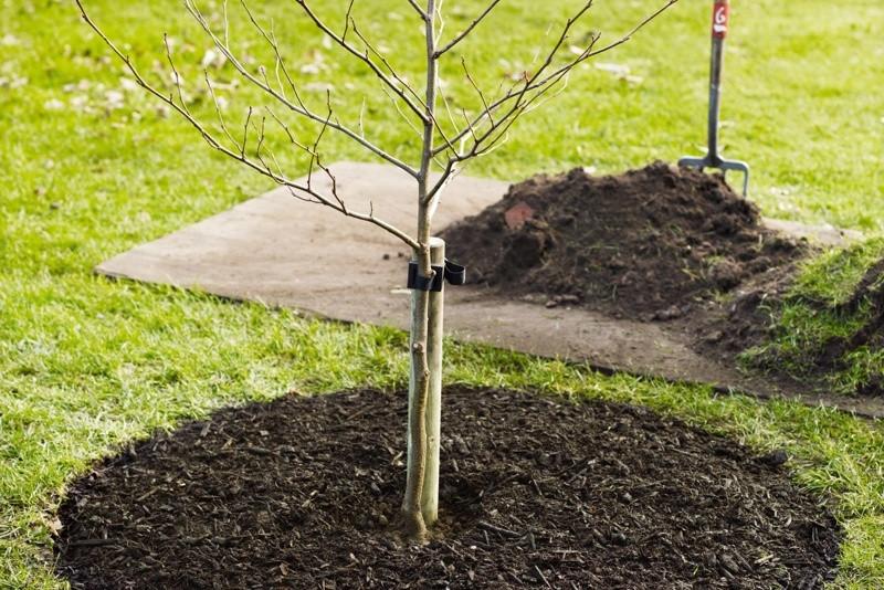 Opbinde træ. Guide: Sådan opbinder du et træ korrekt