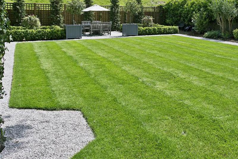 Ny græsplæne. Sådan får du den perfekte plæne