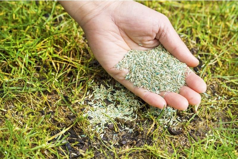 Eftersåning af græsplæne. Sådan eftersår du din plæne (Guide)