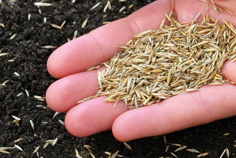 Græsfrø til en smuk og stærk græsplæne - Vælg de rigtige græsfrø