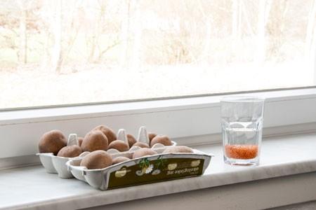 Læggekartofler - forspiring i februar