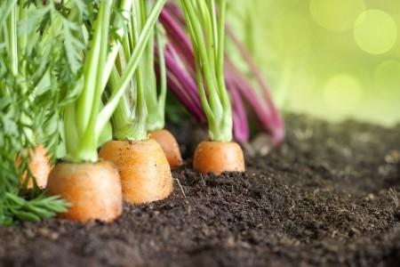 Økologisk køkkenhave - 6 gode råd