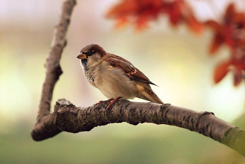 Din guide til flere fugle i haven