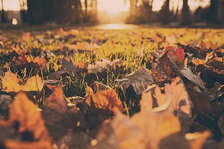 Bæredygtig have – haveglad med omtanke for naturen
