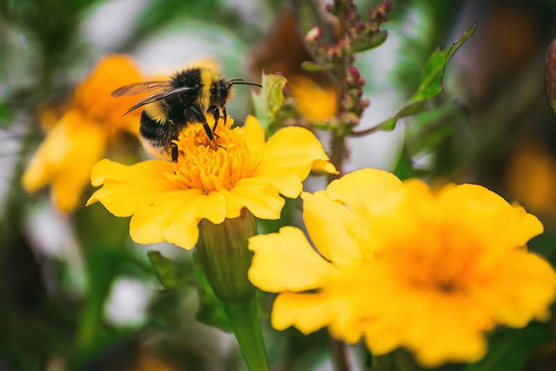 Få flere insekter i haven. Lav et paradis for bier, sommerfugle og insekter